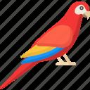 parrot, bird, fly, nature, pet