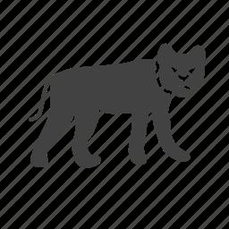 animal, fast, jungle, leopard, lion, tiger, wild icon