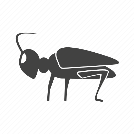 animal, bug, grasshopper, grasshoppers, green, insect icon