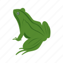 amphibian, animal, frog, frogs, green, tropical, water icon
