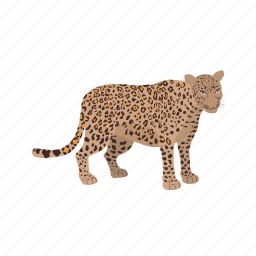 animal, fast, jungle, leopard, lion, tiger, wild icon