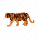 animal, carnivore, cub, mammal, predator, tiger, wild icon