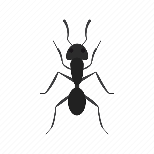 ant, beetle, bug, fly, insect, pest, termite icon