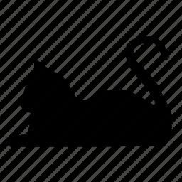 animal, animals, cat, cute, kitty, pet icon