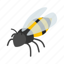 animal, bee, fly, honey, insect, isometric, wing icon