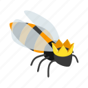 animal, bee, fly, honey, insect, isometric, queen icon