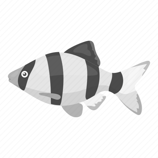 Animal, aquarium, exotic, fish, mahseer, tropic, view icon - Download on Iconfinder