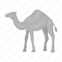 animal, artiodactyl, camel, mammal, nature, pet, zoo icon