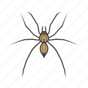 animal, arachnid, arthropod, grass spider, invertebrate, spider