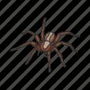 animal, arthropod, hunting spider, invertebrate, spider, wolf spider icon