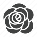 rose, flower, aroma