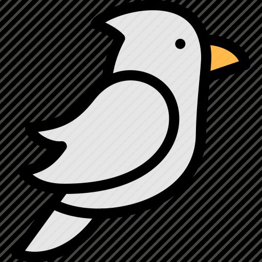 animal, australia, bird, endemic icon