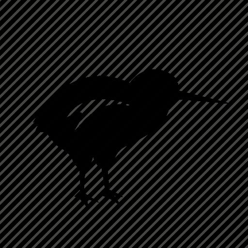 Bird icon, kiwi, new zealand icon - Download on Iconfinder
