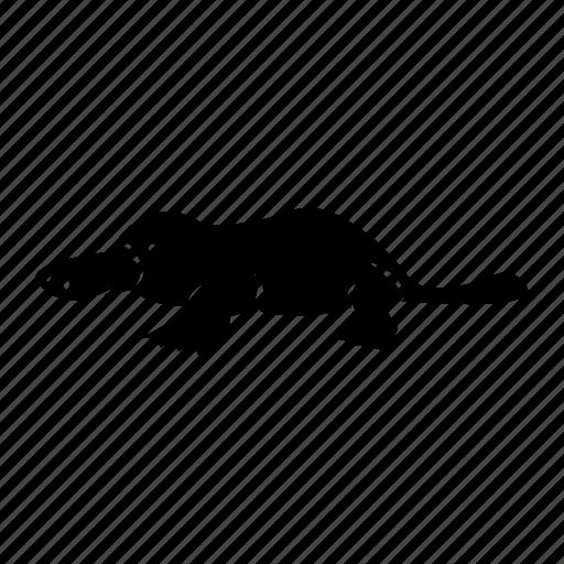 Australia, endemic icon, platypus icon - Download on Iconfinder