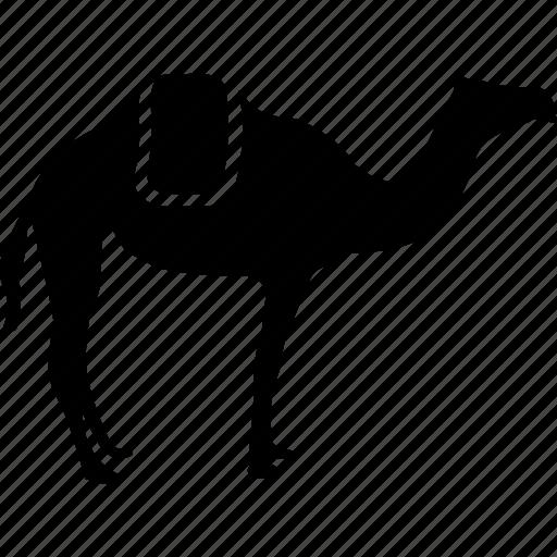 animal, camel, camel walking, desert, transport icon