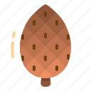 autumn, cone, nature, nut, pine