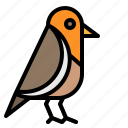animals, bird, pet, robin, small icon