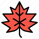 autumn, fall, leaf, maple, plant icon