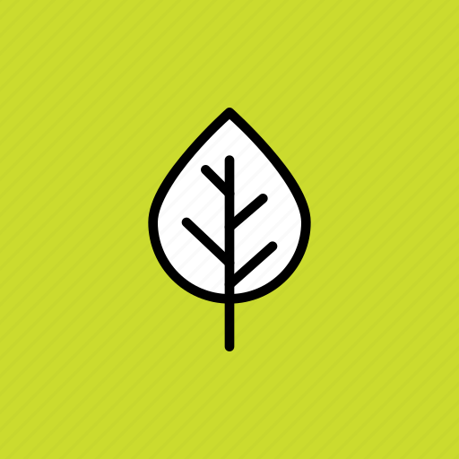 autumn, beech, birch, fall, leaf, nature, season icon