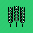 agriculture, crop, food, gluten, grain, harvest, wheat