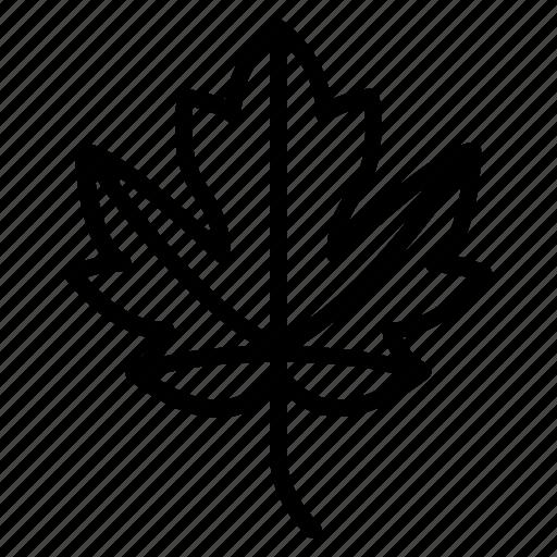 aspen, autumn, hazel, juniper, laurel, leaf, tree icon