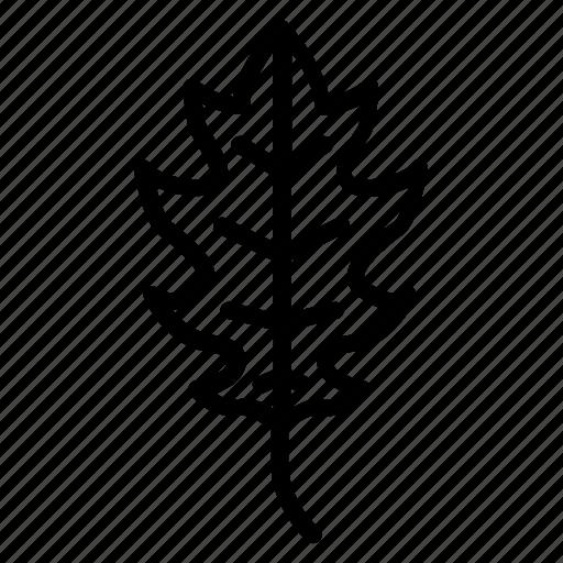 alder, ash, aspen, autumn, leaf, oak, tree icon