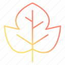 autumn, beech, fall, leaf, spring icon