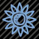 flower, sunflower, blossom, spring, thanksgiving, chrysanthemum, daisy