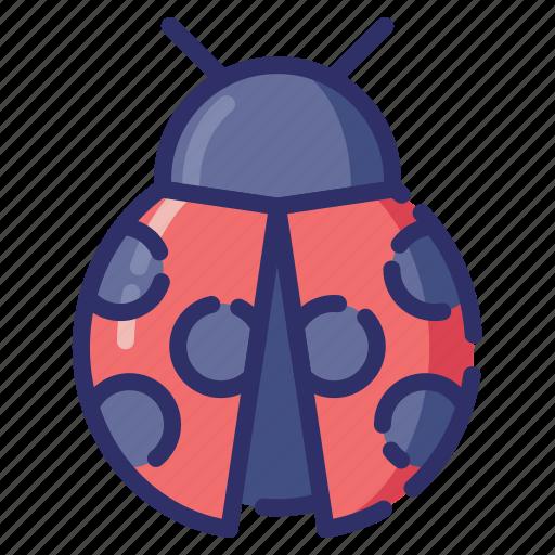 animal, autumn, bug, insect, ladybug icon