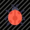 autumn, bug, fall, insect, ladybug icon