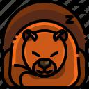 animal, autumn, bear, hibernation, inactivity, sleep