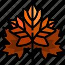 autumn, fall, garden, leaf, maple icon