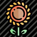 autumn, fall, flower, season, sun, weather icon