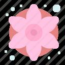 colorful, decorative, flower, flowers, generic