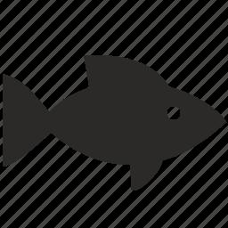 animal, fish, food, goldfish icon