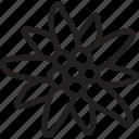 bavaria, bavarian, bayern, edelweiss