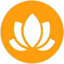 american lotus, beauty, flower, lotus, relax, spa, wild spring flower icon
