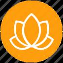 american lotus, beauty, flower, lotus, relax, spa, wild spring flower