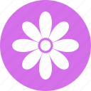bloom, blossom, daisy, flower, nature icon