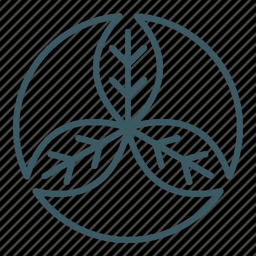 leaf, natural, organic, trinity icon