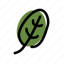vegan, foods, spinach, herb, vegetable, food, plant