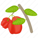 apple flower, berry fruit, red berries, rose apple, wax apple icon