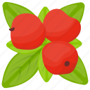 berries, berry fruit, lingonberry, organic berry, red berries icon