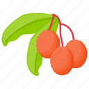 berry, berry fruit, lychee, lychee fruit, pulpy fruit icon
