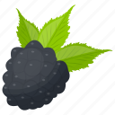 berries, berry fruit, black raspberry, organic berry, raspberry icon