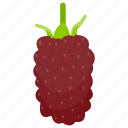 berry fruit, black currant, gooseberry, loganberry, raspberry icon