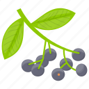 berries, berry, berry fruit, blackberry, forest berry icon