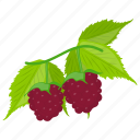 berries, berry fruit, grapes, grapes bunch, red grapes icon