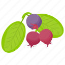 berries, berry fruit, black currant, blackberries, currant fruit icon