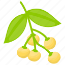 berries, berry fruit, inca berries, inca fruit, inca plant icon